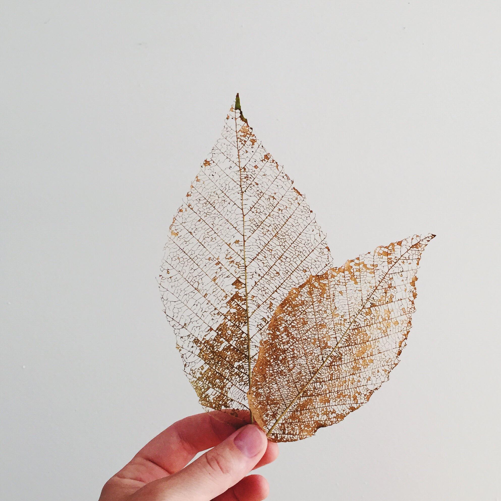Alana Dorothy Leaf Skeletons